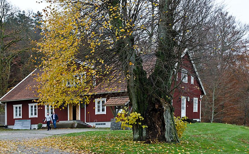 SL Den-stora-linden-på-Alvhems-kungsgård